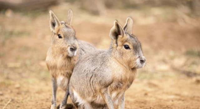 Naturaleza Pregunta Trivia: ¿Qué animal es el de la foto?