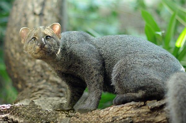 Naturaleza Pregunta Trivia: ¿Qué animal se muestra en la fotografía?