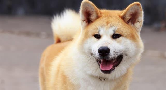 Природа Вопрос: Собака какой породы изображена на фото?