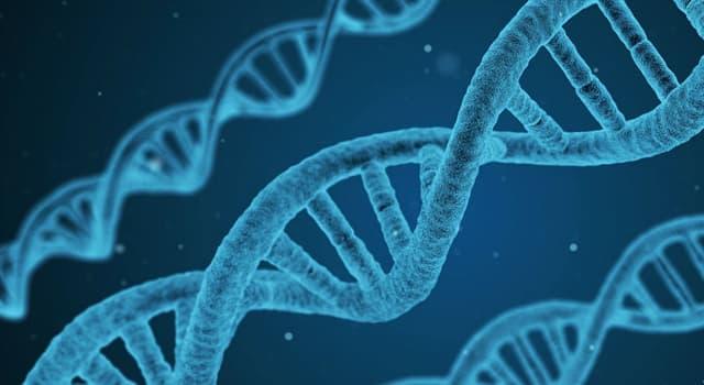 Сiencia Pregunta Trivia: ¿Tienen genes las plantas?