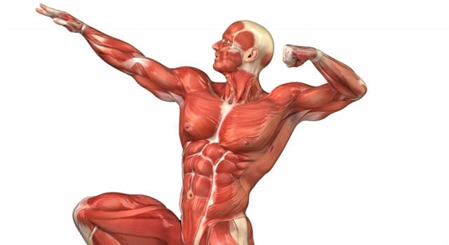 Science Trivia Question: Which part of the human body does osteoarthritis affect?