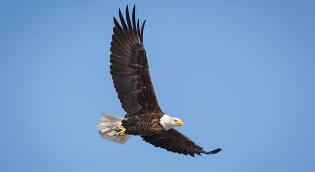 Природа Вопрос: Что является основным источником пищи белоголового орлана?