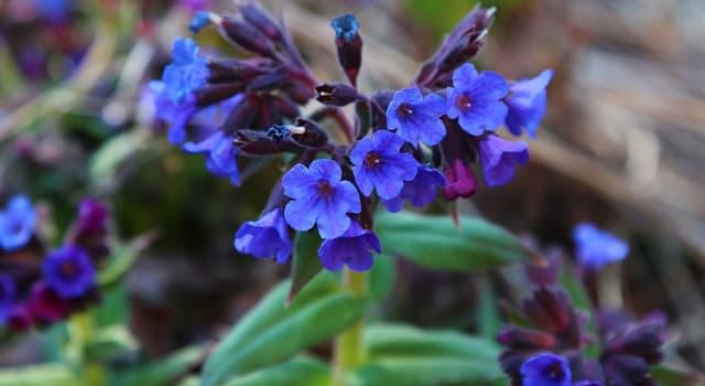 Природа Вопрос: Какое растение называют живым светофором?