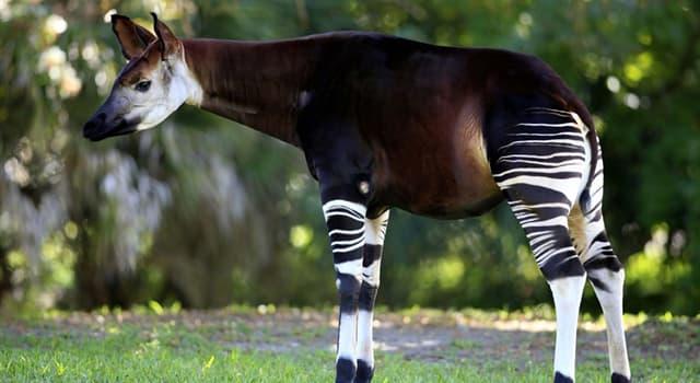 Natur Wissensfrage: Welches Tier ist auf diesem Bild dargestellt?