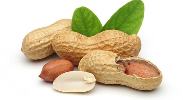 Наука Вопрос: Правда ли, что арахис можно использовать в производстве динамита?