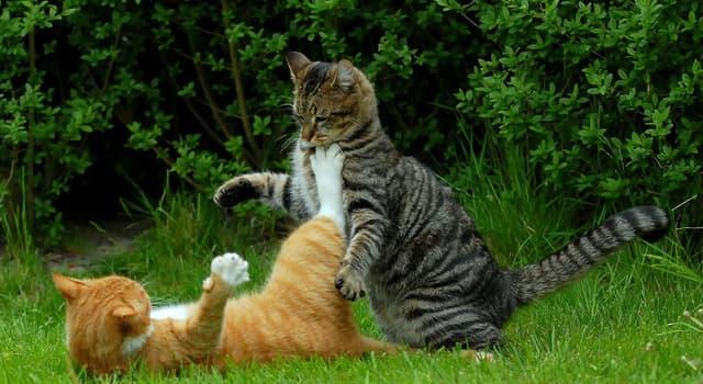 Общество Вопрос: Сколько лет, согласно книге рекордов Гиннеса, самой долгоживущей кошке в мире?
