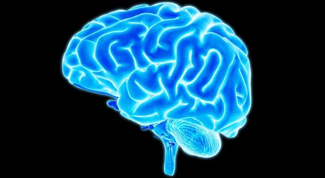 Science Trivia Question: The brain is a part of which organ system?