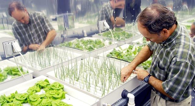 Wissenschaft Wissensfrage: Wie heißt eine Form der Pflanzenhaltung, bei der die Pflanzen nicht in Erdreich wurzeln?