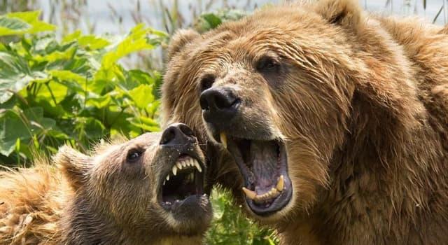 Kultur Wissensfrage: Welcher Dichter hatte einen Bären als Haustier?