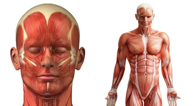 Wissenschaft Wissensfrage: Wo im menschlichen Körper befindet sich Axis?
