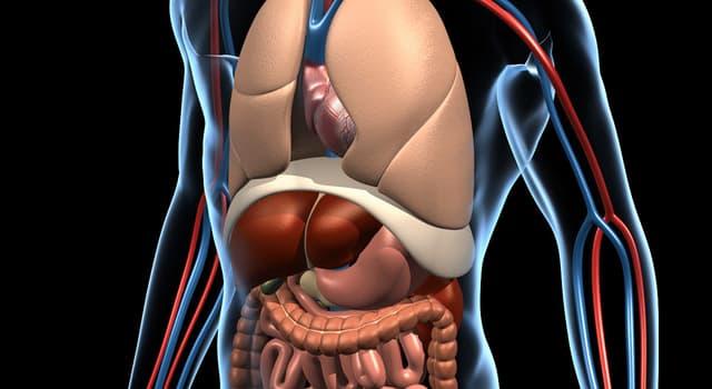 Wissenschaft Wissensfrage: Welches Organ produziert Gastrin?