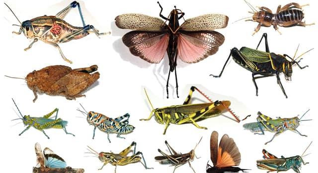 """Natur Wissensfrage: Welches Tier ist auch als """"weiße Ameise"""" bekannt?"""