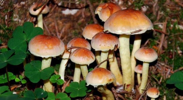 Wissenschaft Wissensfrage: Wie heißt die Wissenschaft von den Pilzen?