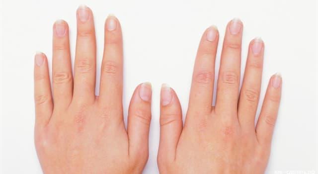 Wissenschaft Wissensfrage: Stimmt es, dass Fingernägel und Zehennägel gleich schnell wachsen?