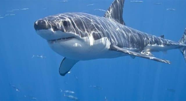 Natur Wissensfrage: Stimmt es, dass Haifische versuchen, Delfine zu vermeiden?