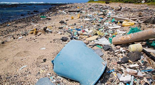 Wissenschaft Wissensfrage: Unter welchem Begriff versteht man die Wissenschaft vom Müll?