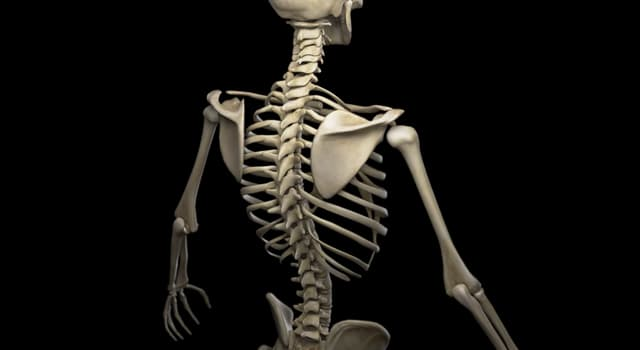 Wissenschaft Wissensfrage: Wo befindet sich der kleinste Muskel im menschlichen Körper?