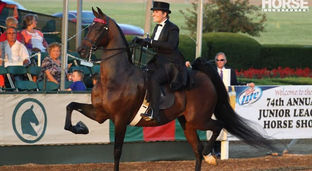 Nature Trivia Question: How many gaits do 'American Saddlebred' horses generally have?