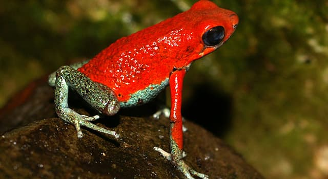 Nature Trivia Question: What is the coloration called of an animal that warns predators it is toxic called?
