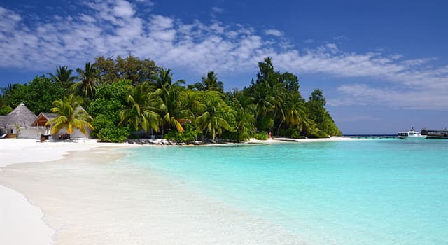 Nature Trivia Question: What's the national tree of the Maldives?