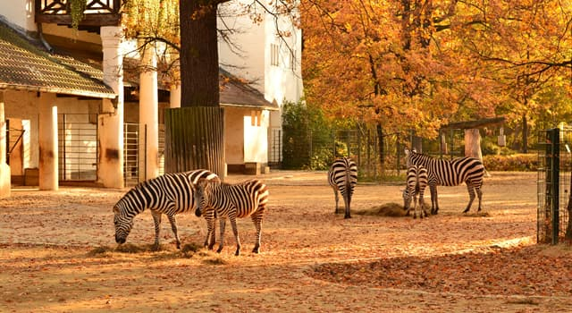 Nature Trivia Question: Which zoo presents one of the most comprehensive collection of species in the world?