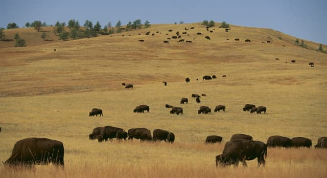 "Culture Trivia Question: Who wrote the book ""My Life on the Plains""?"