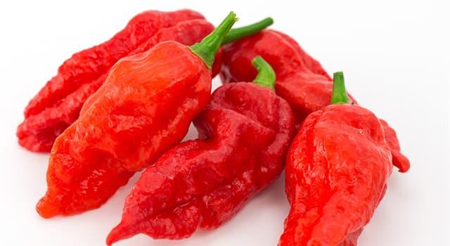 """Natur Wissensfrage: Woher stammt die Paprika-Sorte """"Bhut Jolokia""""?"""