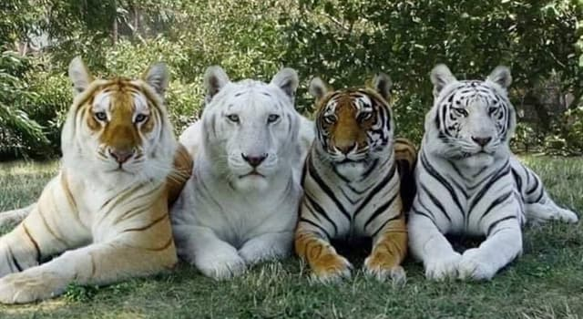 Nature Trivia Question: As of 2014, which country is home to the world's largest population of wild tigers?