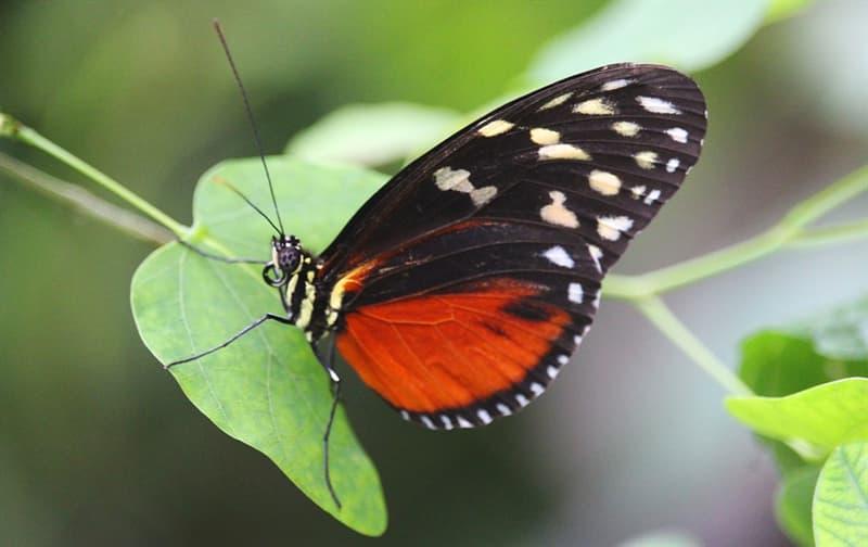 Naturaleza Pregunta Trivia: ¿Cuál es el animal o insecto que produce más muertes anualmente entre los humanos?