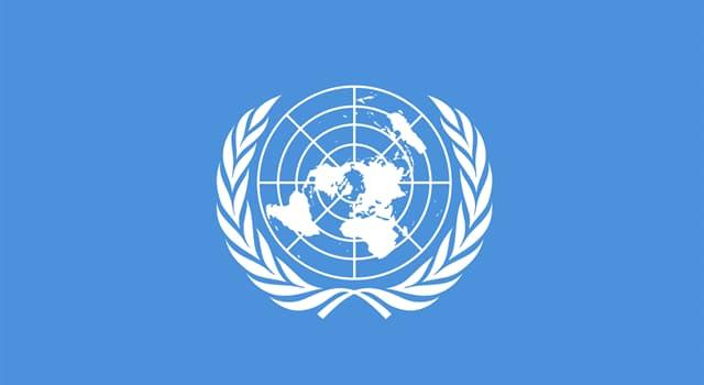 Geographie Wissensfrage: Die Zweigen welches Baums sind auf der Flagge der Vereinten Nationen abgebildet?