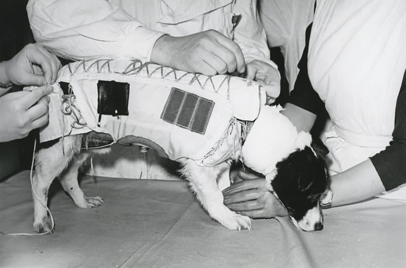 Наука Вопрос: Собаки запущенные в космос 22 февраля 1966 года установили мировой рекорд по продолжительности полета (22 дня). А как звали этих собак?