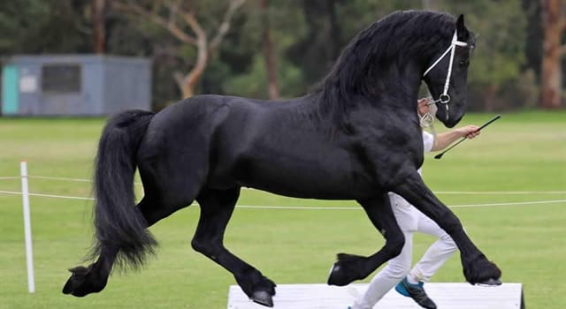 Nature Trivia Question: Which breed of horse is this?