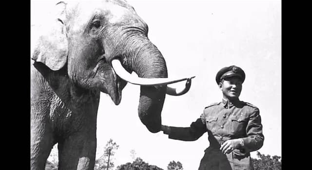 Nature Trivia Question: Which of these long-living elephants died at the age of 86 in Taiwan?