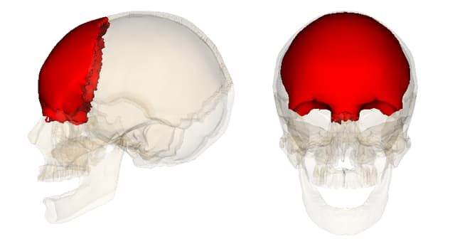 Science Trivia Question: Which bone covers the forehead and is located right above the eyes?