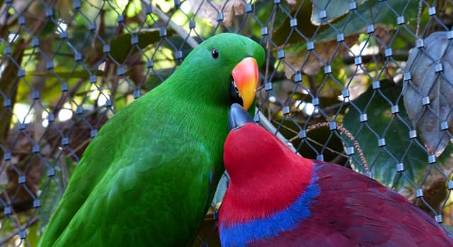 Nature Trivia Question: Which of these is a long-tailed parrot?