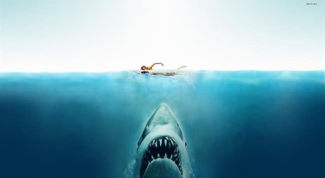 "Movies & TV Trivia Question: Who did Steven Spielberg name the shark after in the film ""Jaws""?"