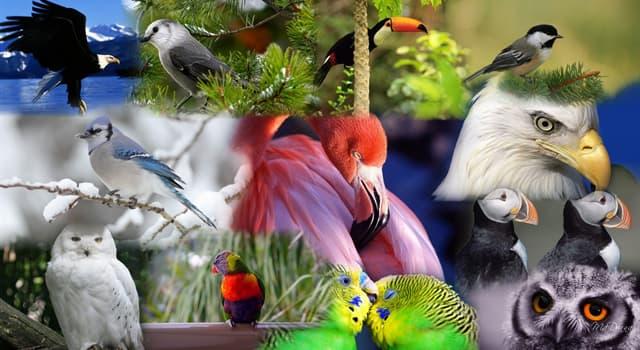 Natur Wissensfrage: Der älteste, beringte Wildvogel der Welt gehört zu welcher Spezies?