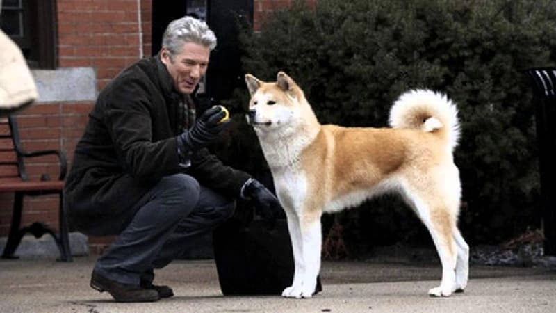 """Cultura Pregunta Trivia: ¿En qué país vivió el perro al que hace referencia la película """"Siempre a tu lado""""?"""
