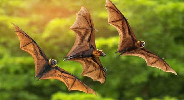 Nature Trivia Question: Fruit bats are vital to reforestation because of their ability to disperse what part of the fruit?