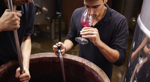 Culture Trivia Question: How many basic stages to the winemaking process are there?