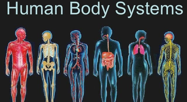 Science Trivia Question: In the human body, an osteoblast is a type of cell involved in the formation of which tissue?