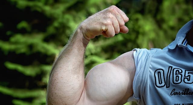 Science Trivia Question: In which part of the body is the Deltoid muscle?
