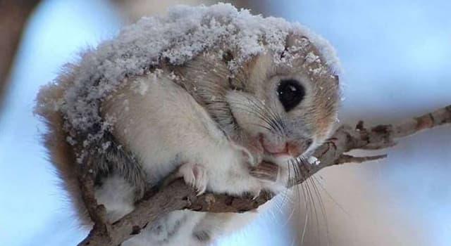 Natur Wissensfrage: In wie viele Arten wird die Familie Hörnchen eingeteilt?