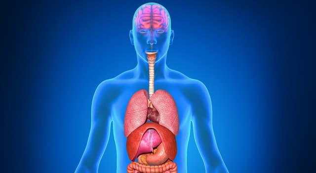 Science Trivia Question: Myringotomy is a surgical procedure of which organ?