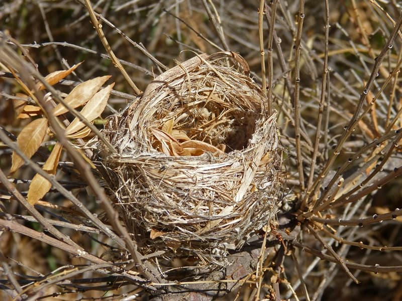 Naturaleza Pregunta Trivia: ¿Qué ave fabrica el nido colgante más grande del mundo?