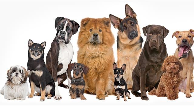 Natur Wissensfrage: Welche davon ist die kleinste Hunderasse?
