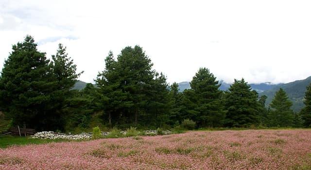 Natur Wissensfrage: Welche dieser Pflanzenarten ist mit dem Rhabarber verwandt?