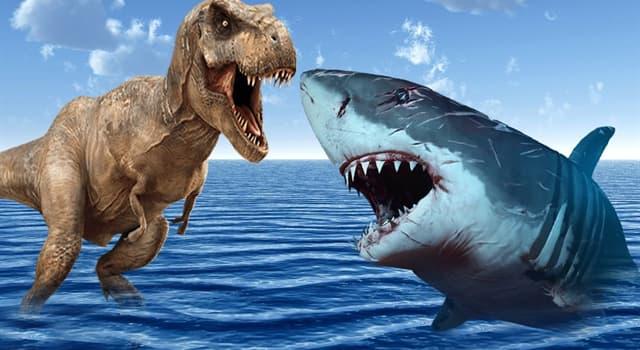 Natur Wissensfrage: Welcher Hai, der schon ausgestorben ist, soll der größte Hai der Welt gewesen sein?