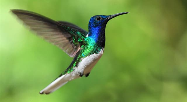 Natur Wissensfrage: Welcher Vogel ist auf dem Foto dargestellt?