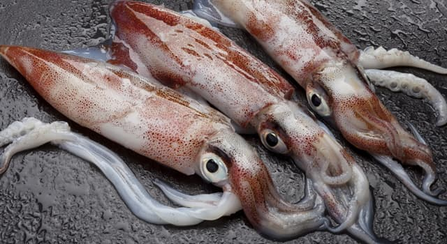 Nature Trivia Question: Which of these is a real sea creature?